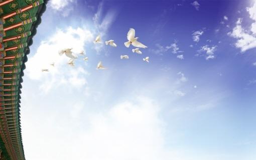새.jpg